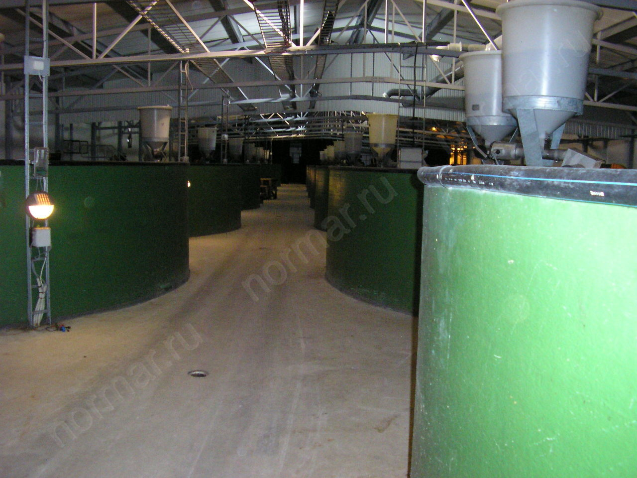 Fish breeding plant