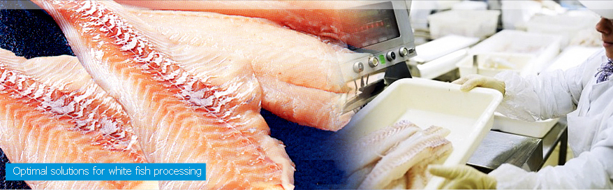Optimal solutions for white fish processing